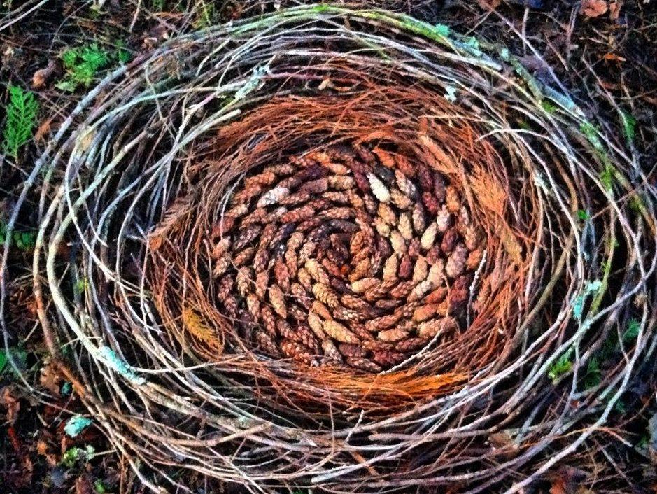 Gap Year: Nest