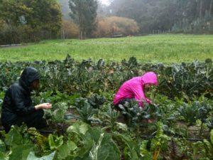 Gap Year: Winter Harvest